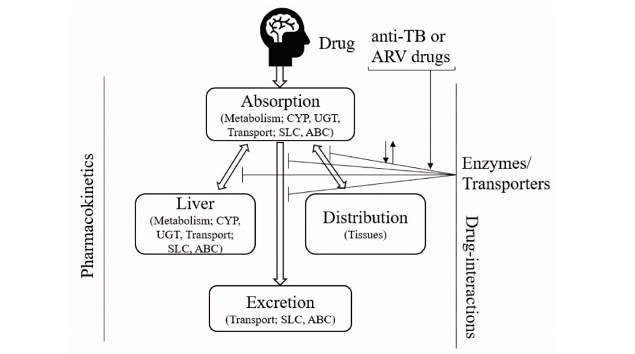 Role of drug metabolic enzymes and transporters in drug-drug interactions between antiretroviral and antituberculosis drugs